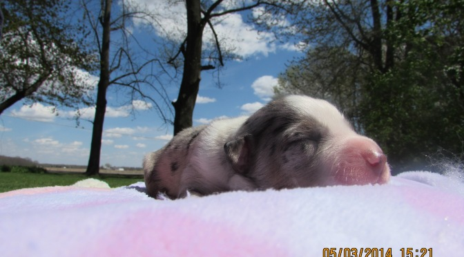 snoozin' on a sunny day